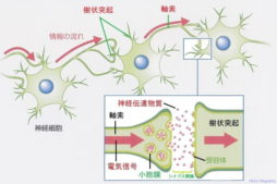 button-only@2x neuron_synapse001-1